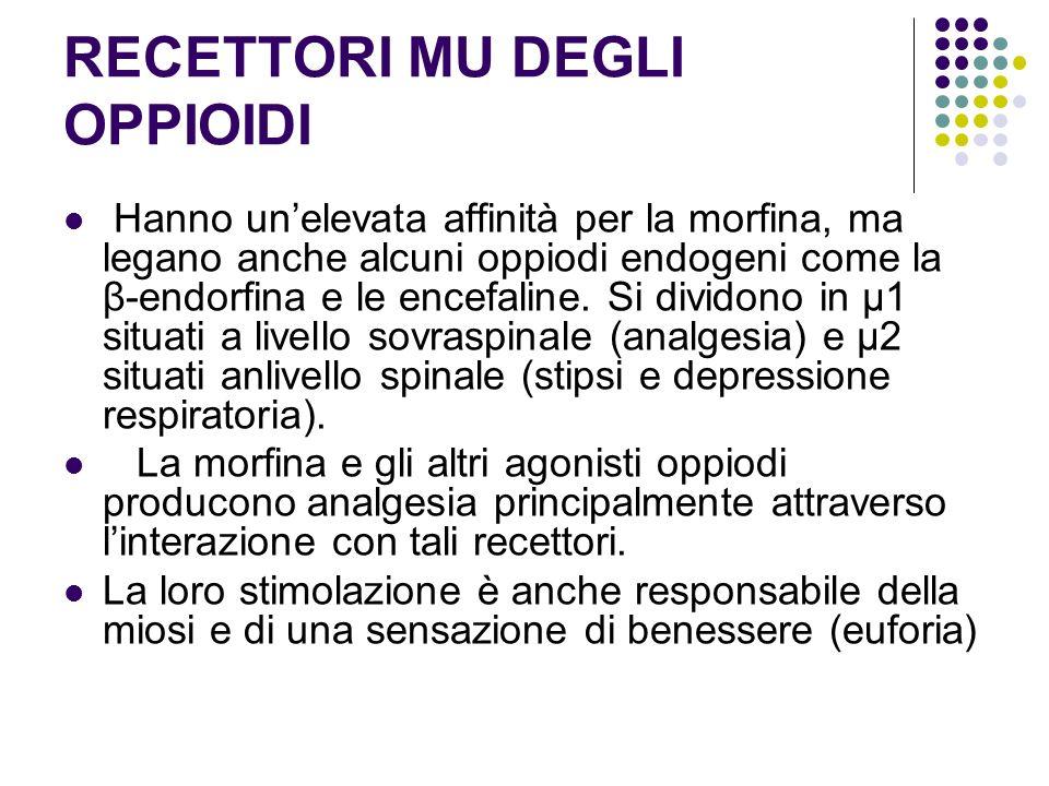 RECETTORI MU DEGLI OPPIOIDI Hanno unelevata affinità per la morfina, ma legano anche alcuni oppiodi endogeni come la β-endorfina e le encefaline. Si d