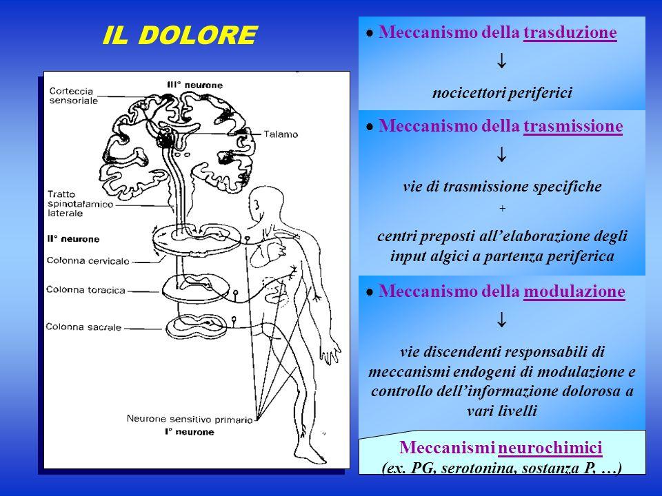 IL DOLORE Meccanismo della trasduzione nocicettori periferici Meccanismo della trasmissione vie di trasmissione specifiche + centri preposti allelabor