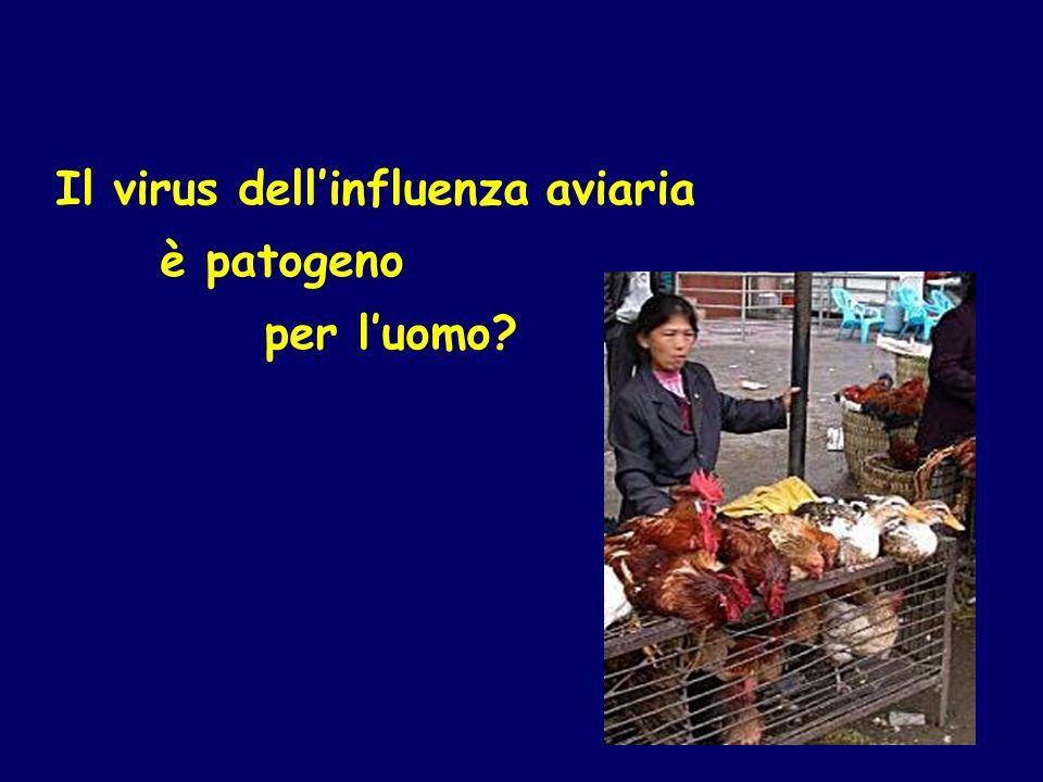 Il virus dellinfluenza aviaria è patogeno per luomo?