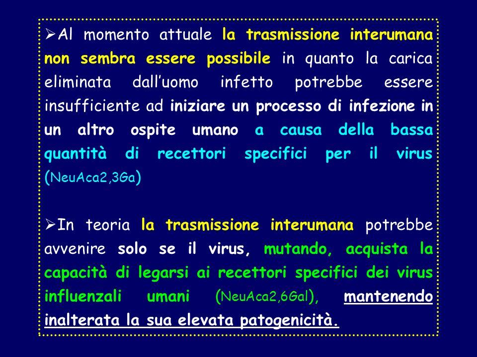 Al momento attuale la trasmissione interumana non sembra essere possibile in quanto la carica eliminata dalluomo infetto potrebbe essere insufficiente