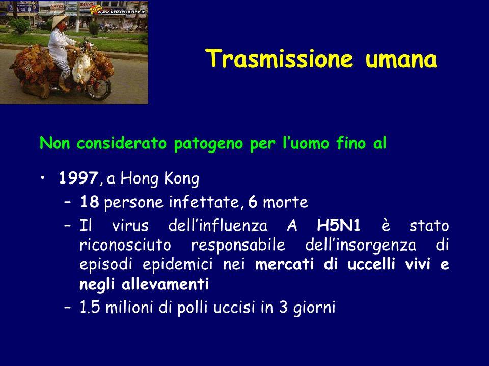 Non considerato patogeno per luomo fino al 1997, a Hong Kong –18 persone infettate, 6 morte –Il virus dellinfluenza A H5N1 è stato riconosciuto respon