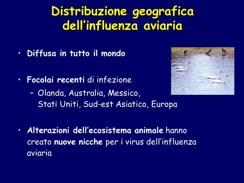 Distribuzione geografica dellinfluenza aviaria Diffusa in tutto il mondo Focolai recenti di infezione –Olanda, Australia, Messico, Stati Uniti, Sud-es