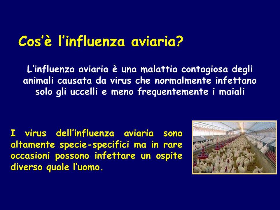Cosè linfluenza aviaria? Linfluenza aviaria è una malattia contagiosa degli animali causata da virus che normalmente infettano solo gli uccelli e meno