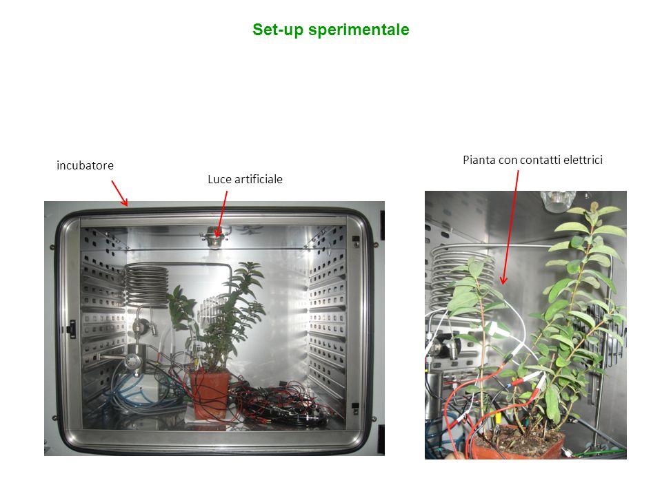 Set-up sperimentale incubatore Luce artificiale Pianta con contatti elettrici