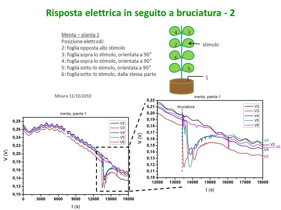 Risposta elettrica in seguito a bruciatura - 3 Menta – pianta 2 Posizione elettrodi: 2: foglia opposta allo stimolo 3: foglia sopra lo stimolo, orientata a 90° 4: foglia sopra lo stimolo, orientata a 90° 5: foglia sotto lo stimolo, dalla stessa parte 6: foglia sotto lo stimolo, dalla stessa parte 1 5 6 4 2 3 stimolo Misura 12/10/2010
