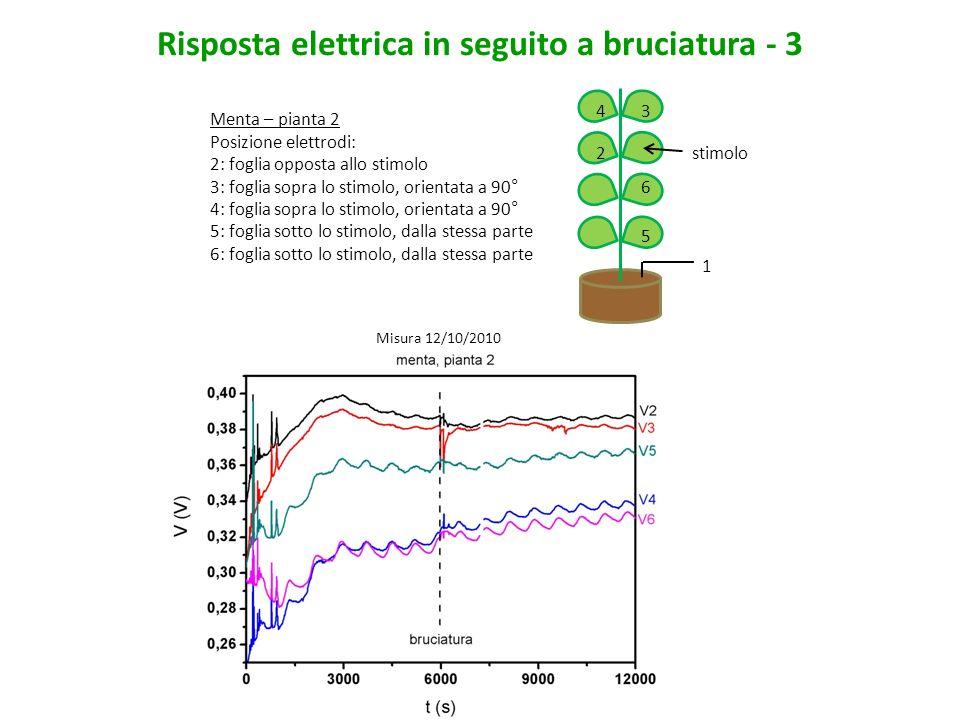 Risposta elettrica in seguito a bruciatura - 4 Menta – pianta 3 Posizione elettrodi: 2: foglia sotto lo stimolo, orientata a 90° 3: foglia sopra lo stimolo, orientata a 90° 4: foglia sopra lo stimolo, orientata a 90° 5: foglia opposta allo stimolo 6: foglia sotto lo stimolo, dalla stessa parte 1 5 6 4 2 3 stimolo Misura 12/10/2010
