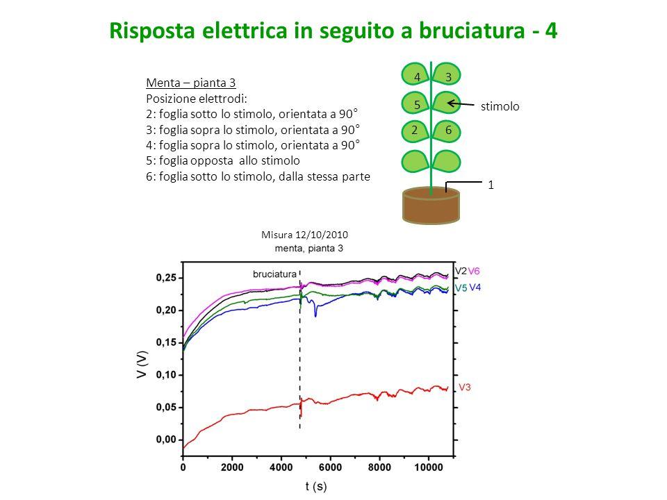 Risposta elettrica in seguito a bruciatura - 4 Menta – pianta 3 Posizione elettrodi: 2: foglia sotto lo stimolo, orientata a 90° 3: foglia sopra lo st