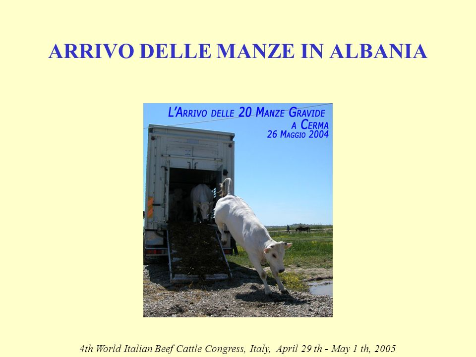 ARRIVO DELLE MANZE IN ALBANIA 4th World Italian Beef Cattle Congress, Italy, April 29 th - May 1 th, 2005