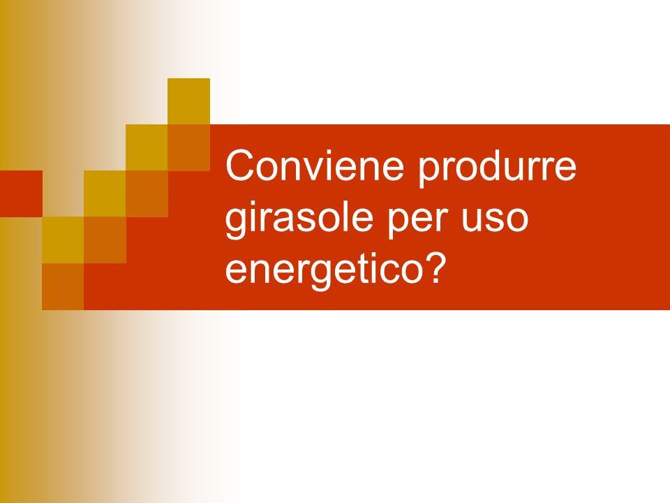 Conviene produrre girasole per uso energetico?