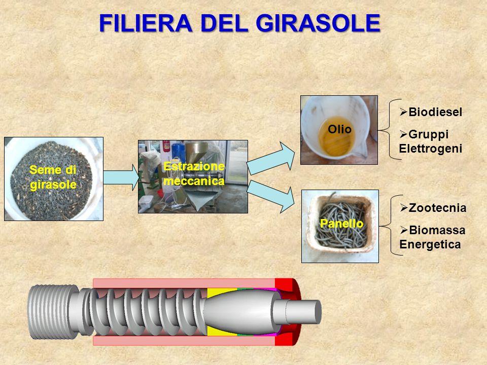FILIERA DEL GIRASOLE Panello Zootecnia Biomassa Energetica Estrazione meccanica Seme di girasole Olio Biodiesel Gruppi Elettrogeni