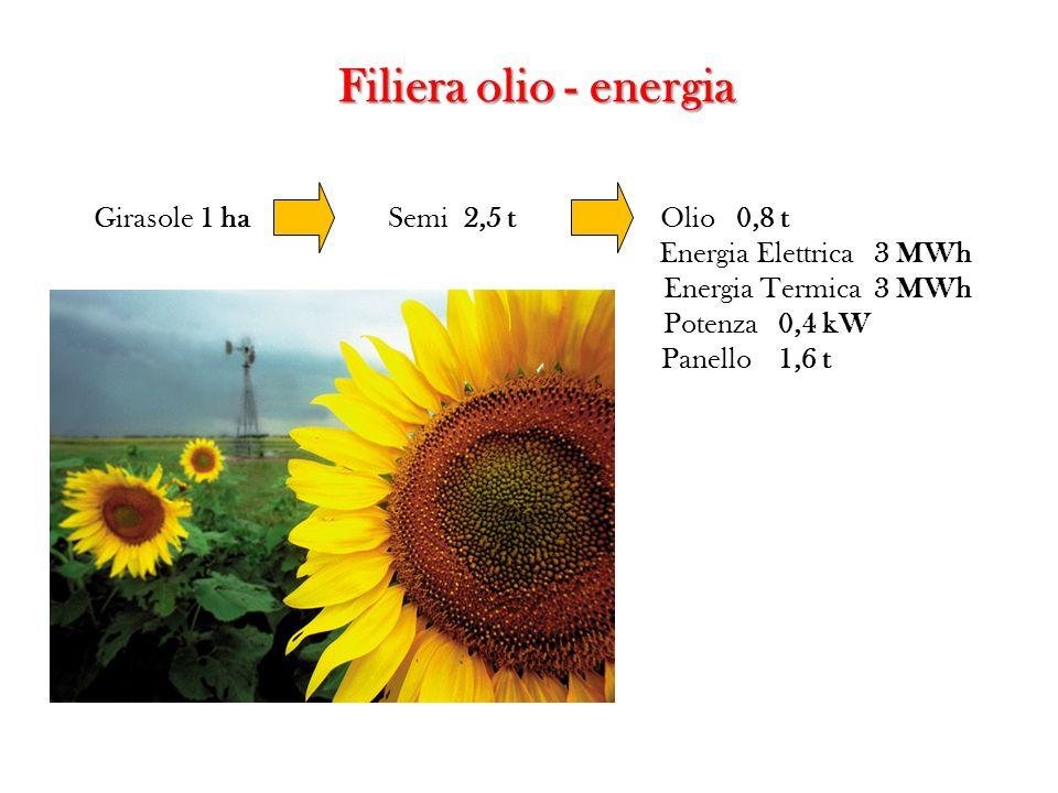 Girasole 1 ha Semi 2,5 t Olio 0,8 t Energia Elettrica 3 MWh Energia Termica 3 MWh Potenza 0,4 kW Panello 1,6 t Filiera olio - energia