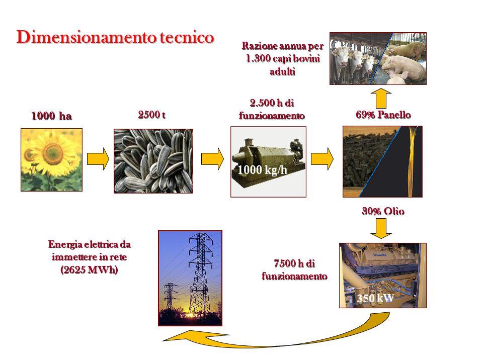 2500 t 2.500 h di funzionamento 69% Panello Razione annua per 1.300 capi bovini adulti 30% Olio 7500 h di funzionamento Energia elettrica da immettere in rete (2625 MWh) Dimensionamento tecnico 1000 ha