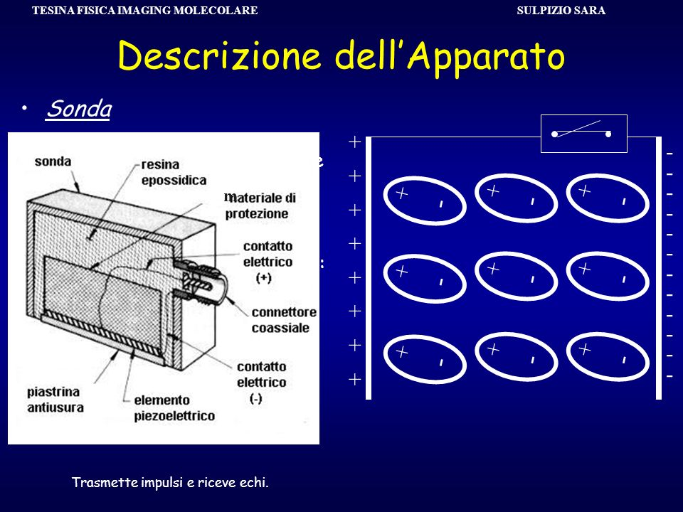SULPIZIO SARA TESINA FISICA IMAGING MOLECOLARE Descrizione dellApparato Sonda Le onde ultrasonore sono generate sfruttando il fenomeno di piezoelettri