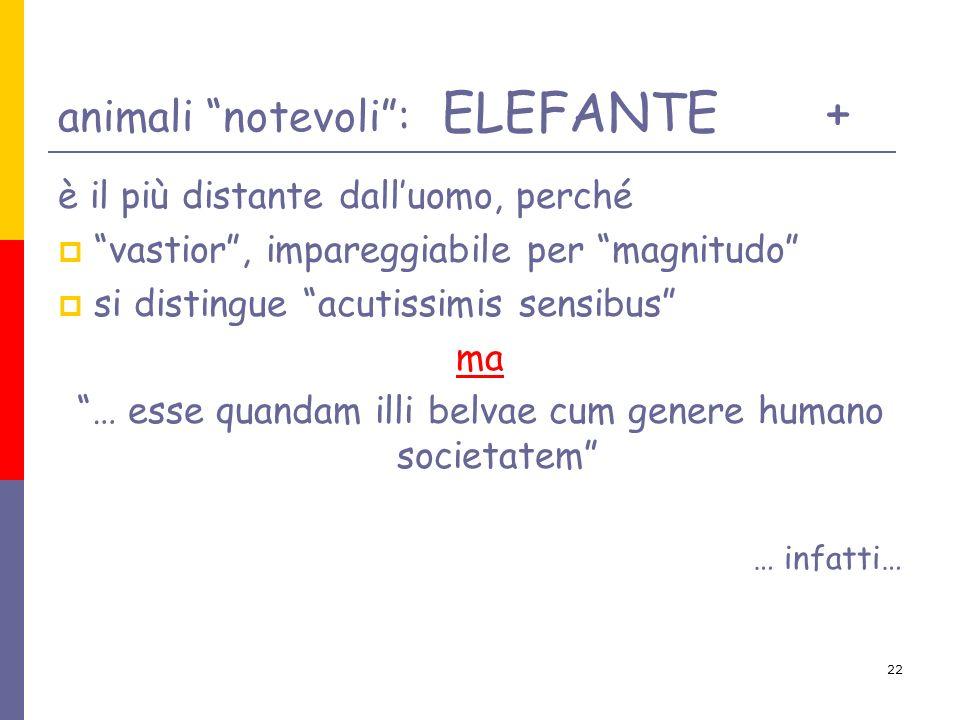 22 animali notevoli: ELEFANTE+ è il più distante dalluomo, perché vastior, impareggiabile per magnitudo si distingue acutissimis sensibus ma … esse qu