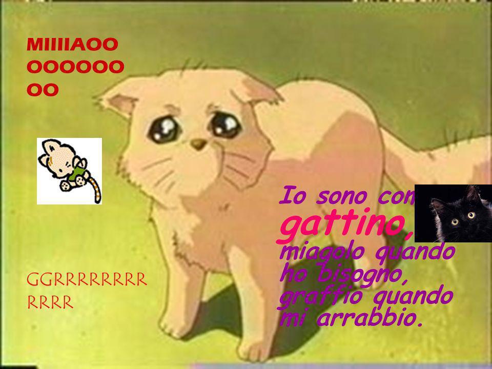Io sono come un gattino, miagolo quando ho bisogno, graffio quando mi arrabbio.