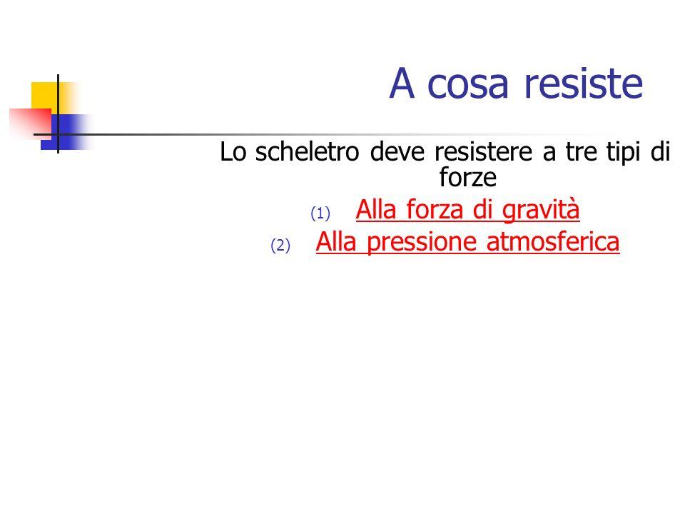 A cosa resiste Lo scheletro deve resistere a tre tipi di forze (1) Alla forza di gravità Alla forza di gravità (2) Alla pressione atmosferica Alla pre