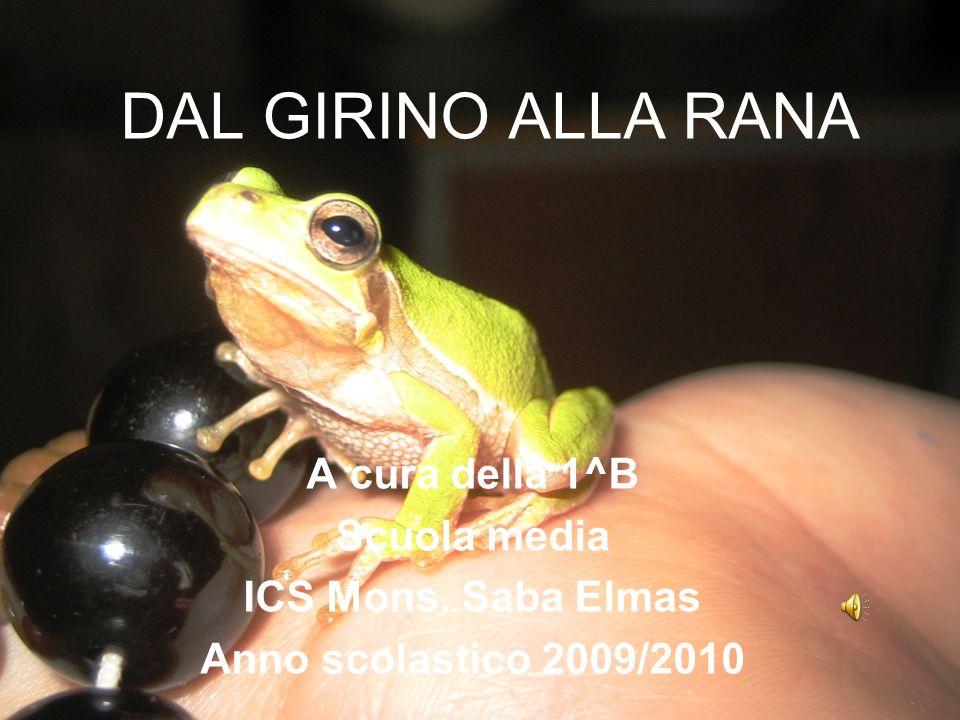 DAL GIRINO ALLA RANA A cura della 1^B Scuola media ICS Mons. Saba Elmas Anno scolastico 2009/2010