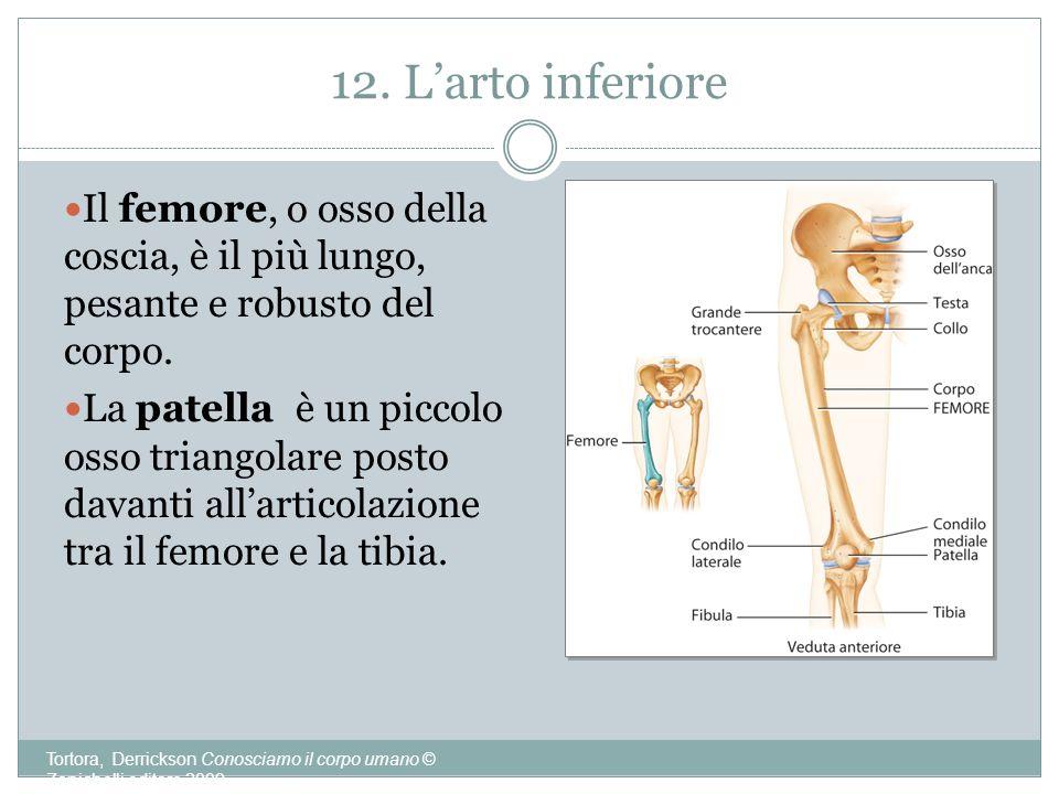 12. Larto inferiore Tortora, Derrickson Conosciamo il corpo umano © Zanichelli editore 2009 Il femore, o osso della coscia, è il più lungo, pesante e