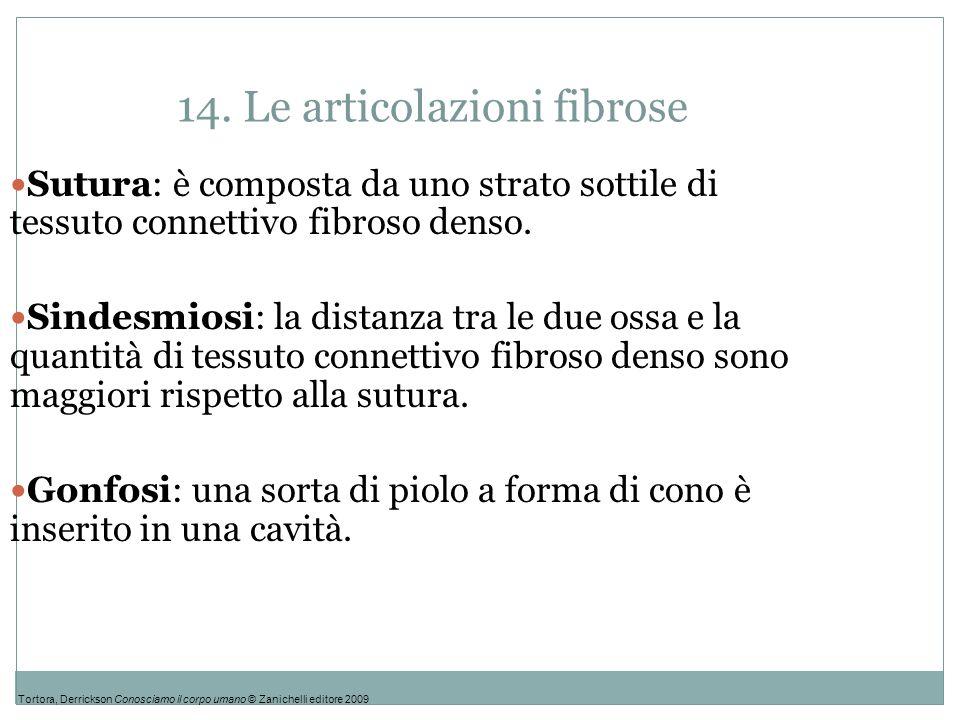 14. Le articolazioni fibrose Sutura: è composta da uno strato sottile di tessuto connettivo fibroso denso. Sindesmiosi: la distanza tra le due ossa e