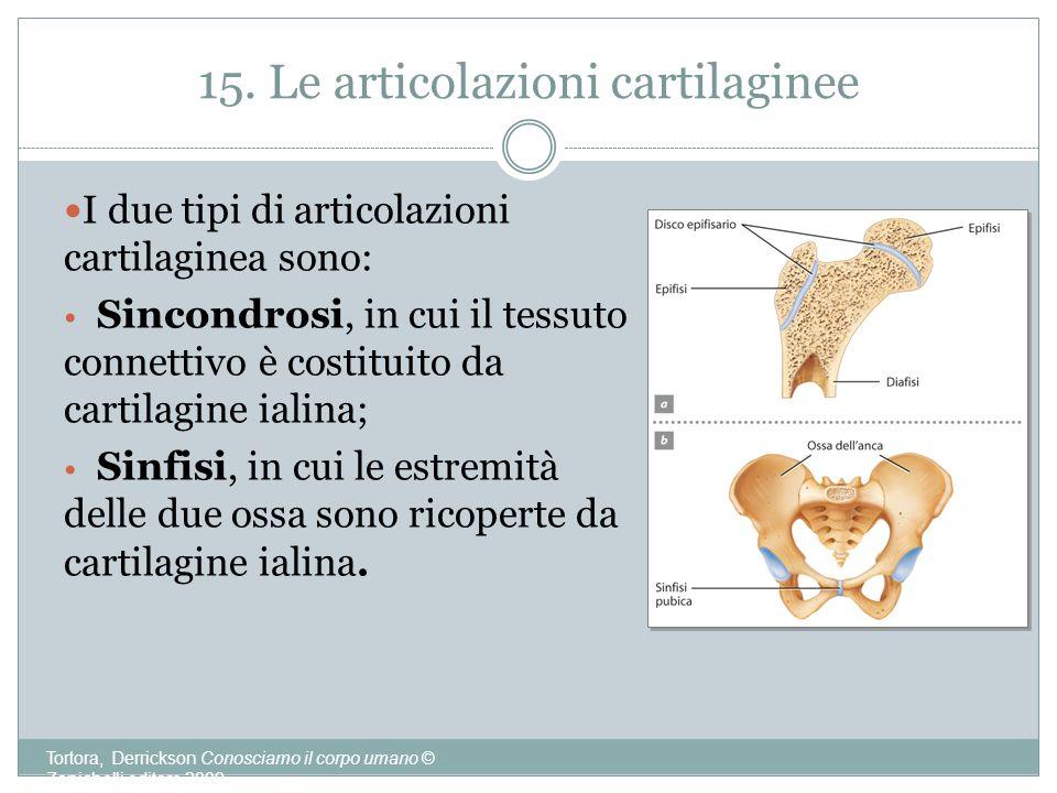 15. Le articolazioni cartilaginee Tortora, Derrickson Conosciamo il corpo umano © Zanichelli editore 2009 I due tipi di articolazioni cartilaginea son