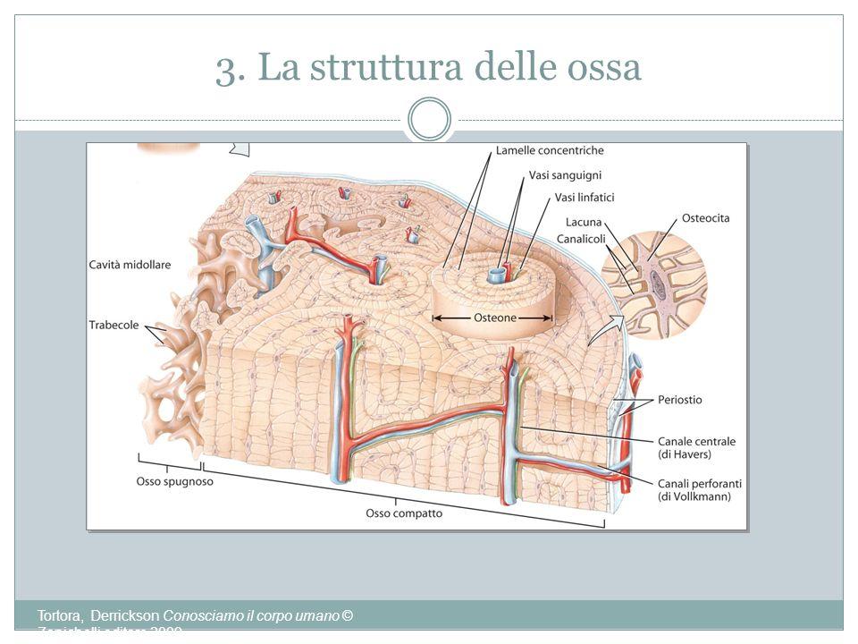 3. La struttura delle ossa Tortora, Derrickson Conosciamo il corpo umano © Zanichelli editore 2009