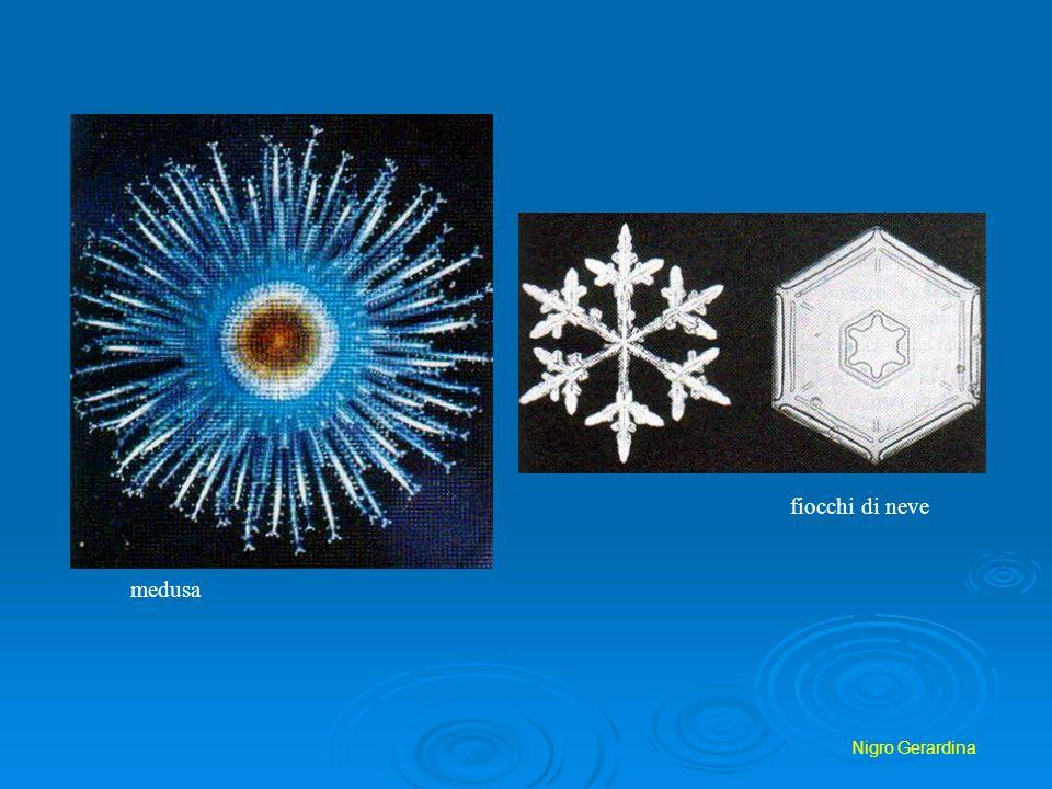 Nigro Gerardina fiocchi di neve medusa