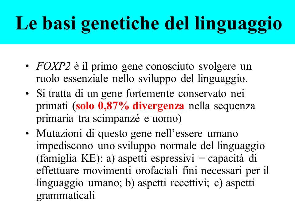 FOXP2 è il primo gene conosciuto svolgere un ruolo essenziale nello sviluppo del linguaggio. Si tratta di un gene fortemente conservato nei primati (s
