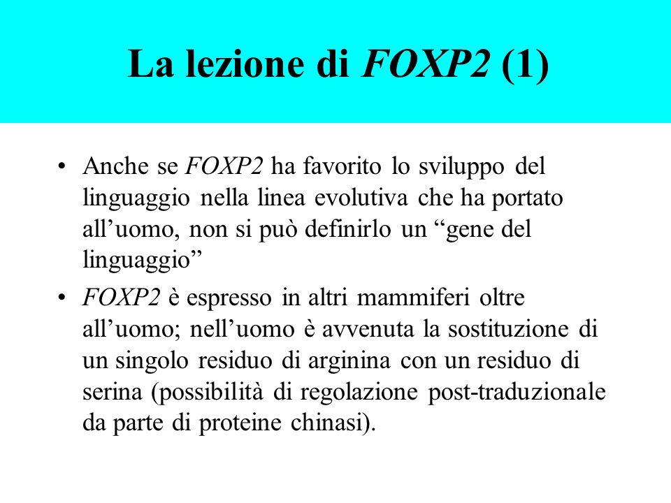 Anche se FOXP2 ha favorito lo sviluppo del linguaggio nella linea evolutiva che ha portato alluomo, non si può definirlo un gene del linguaggio FOXP2