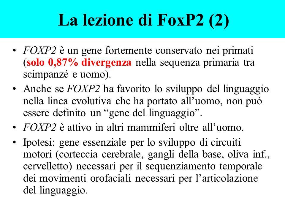 FOXP2 è un gene fortemente conservato nei primati (solo 0,87% divergenza nella sequenza primaria tra scimpanzé e uomo). Anche se FOXP2 ha favorito lo