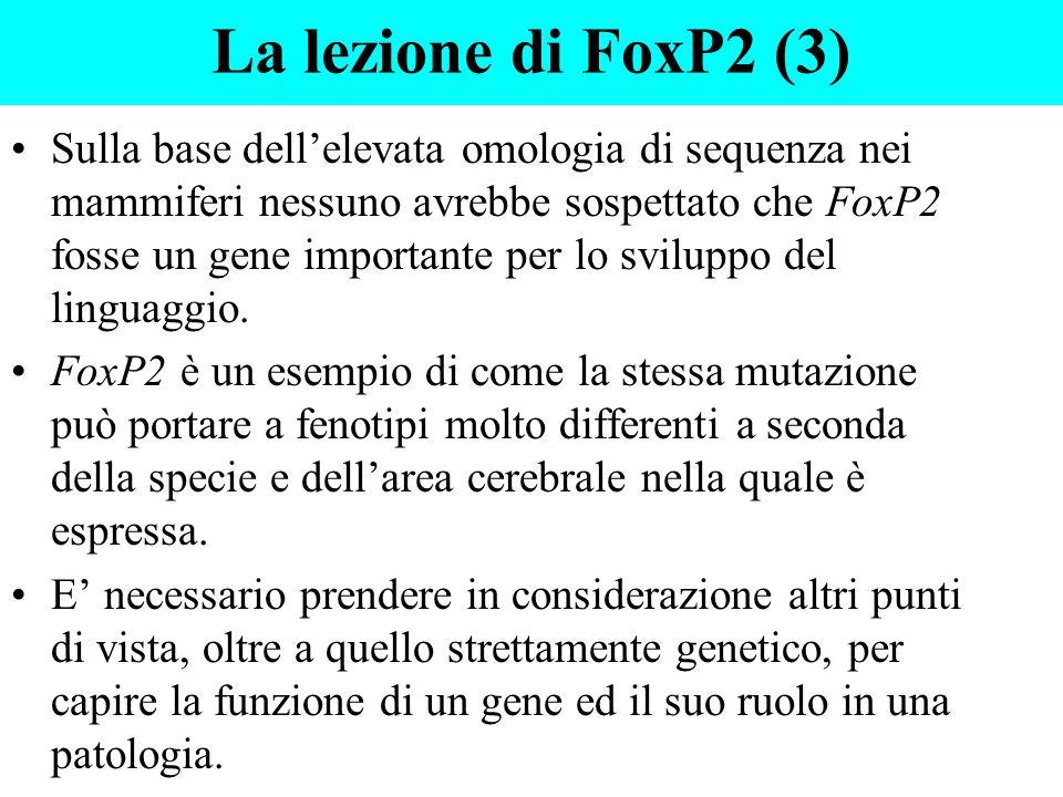 La lezione di FoxP2 (3) Sulla base dellelevata omologia di sequenza nei mammiferi nessuno avrebbe sospettato che FoxP2 fosse un gene importante per lo