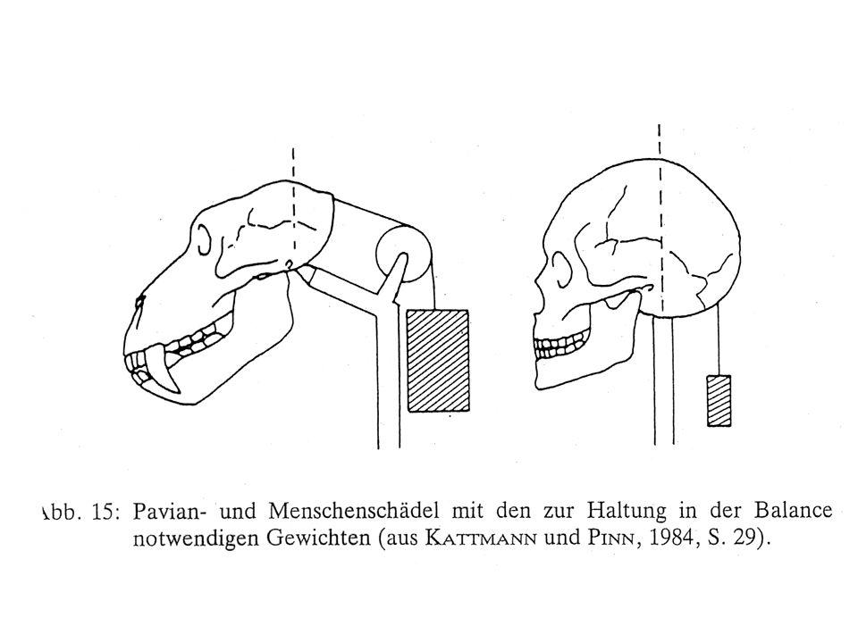 Temi interessanti per lanalisi del problema mente-corpo Lanalisi dellorigine delle differenze strutturali tra uomo e animali.