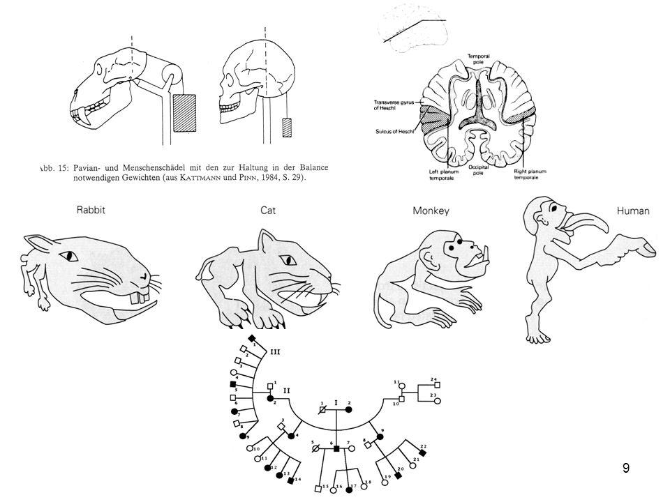 10 Trovato su Internet Per ovviare allassenza di un apparato fonatorio adatto, alcuni ricercatori hanno cercato di insegnare il linguaggio dei sordomuti a primati.