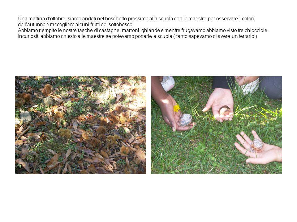 Una mattina dottobre, siamo andati nel boschetto prossimo alla scuola con le maestre per osservare i colori dellautunno e raccogliere alcuni frutti de