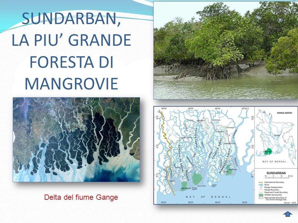 SUNDARBAN, LA PIU GRANDE FORESTA DI MANGROVIE Delta del fiume Gange