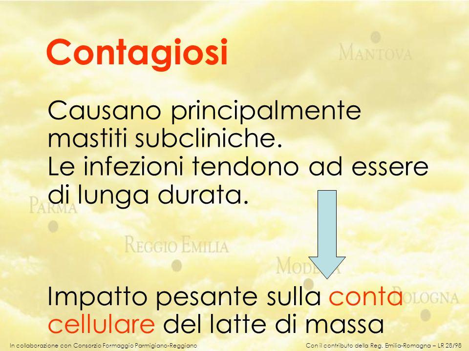 In collaborazione con Consorzio Formaggio Parmigiano-Reggiano Contagiosi Causano principalmente mastiti subcliniche. Le infezioni tendono ad essere di