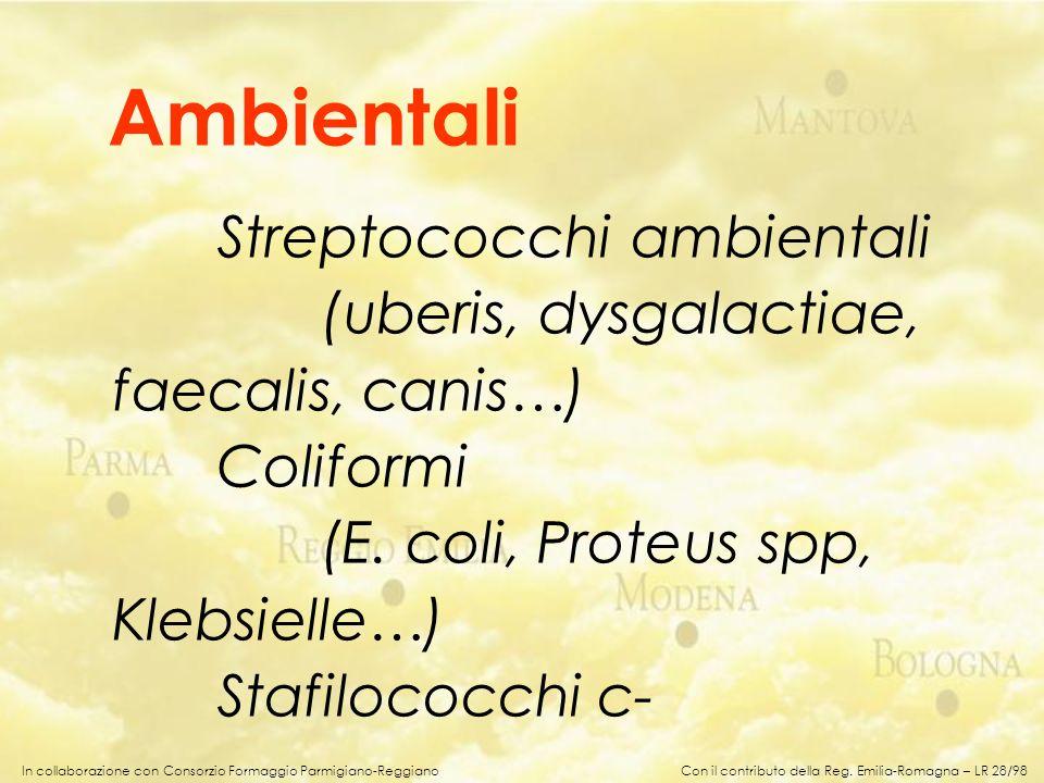 In collaborazione con Consorzio Formaggio Parmigiano-Reggiano Streptococchi ambientali (uberis, dysgalactiae, faecalis, canis…) Coliformi (E. coli, Pr