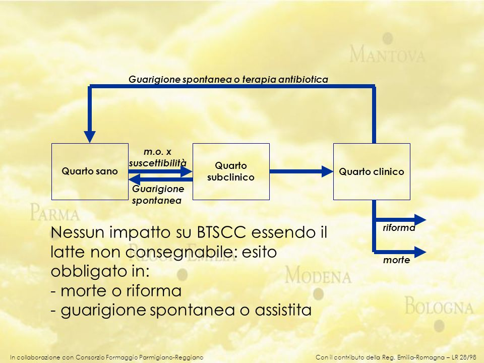 In collaborazione con Consorzio Formaggio Parmigiano-Reggiano Nessun impatto su BTSCC essendo il latte non consegnabile: esito obbligato in: - morte o