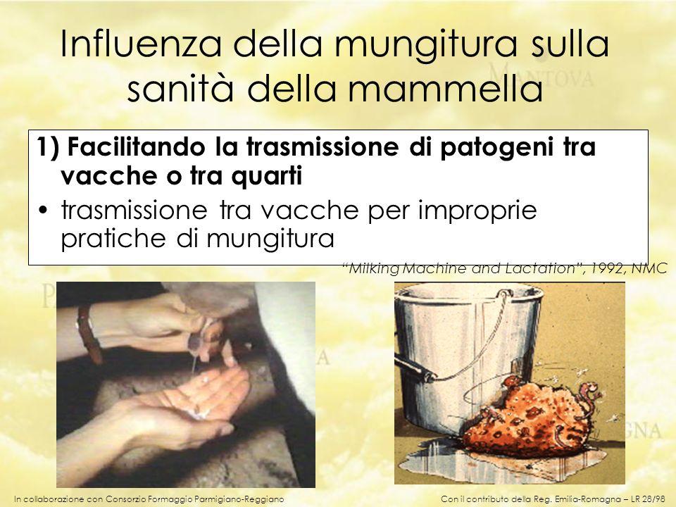 In collaborazione con Consorzio Formaggio Parmigiano-Reggiano 1) Facilitando la trasmissione di patogeni tra vacche o tra quarti trasmissione tra vacc
