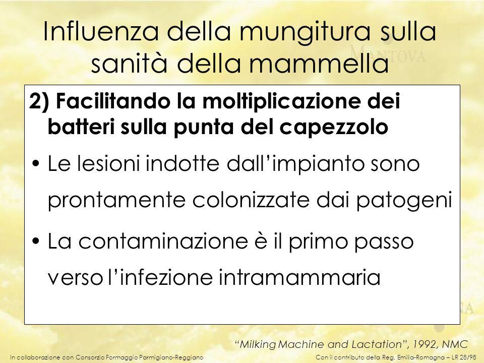 In collaborazione con Consorzio Formaggio Parmigiano-Reggiano 2) Facilitando la moltiplicazione dei batteri sulla punta del capezzolo Le lesioni indot