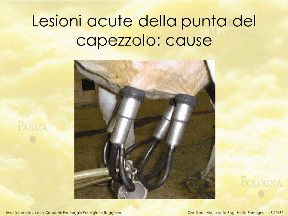 In collaborazione con Consorzio Formaggio Parmigiano-Reggiano Lesioni acute della punta del capezzolo: cause Con il contributo della Reg. Emilia-Romag