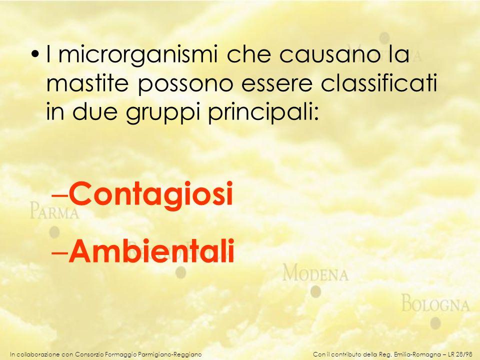 In collaborazione con Consorzio Formaggio Parmigiano-Reggiano I microrganismi che causano la mastite possono essere classificati in due gruppi princip