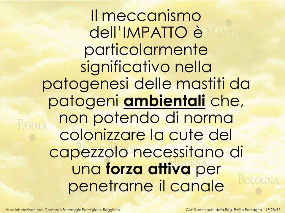 In collaborazione con Consorzio Formaggio Parmigiano-Reggiano Il meccanismo dellIMPATTO è particolarmente significativo nella patogenesi delle mastiti