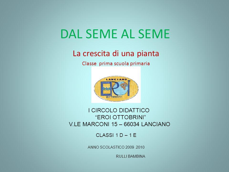 DAL SEME AL SEME La crescita di una pianta Classe prima scuola primaria I CIRCOLO DIDATTICO EROI OTTOBRINI V.LE MARCONI 15 – 66034 LANCIANO CLASSI 1 D