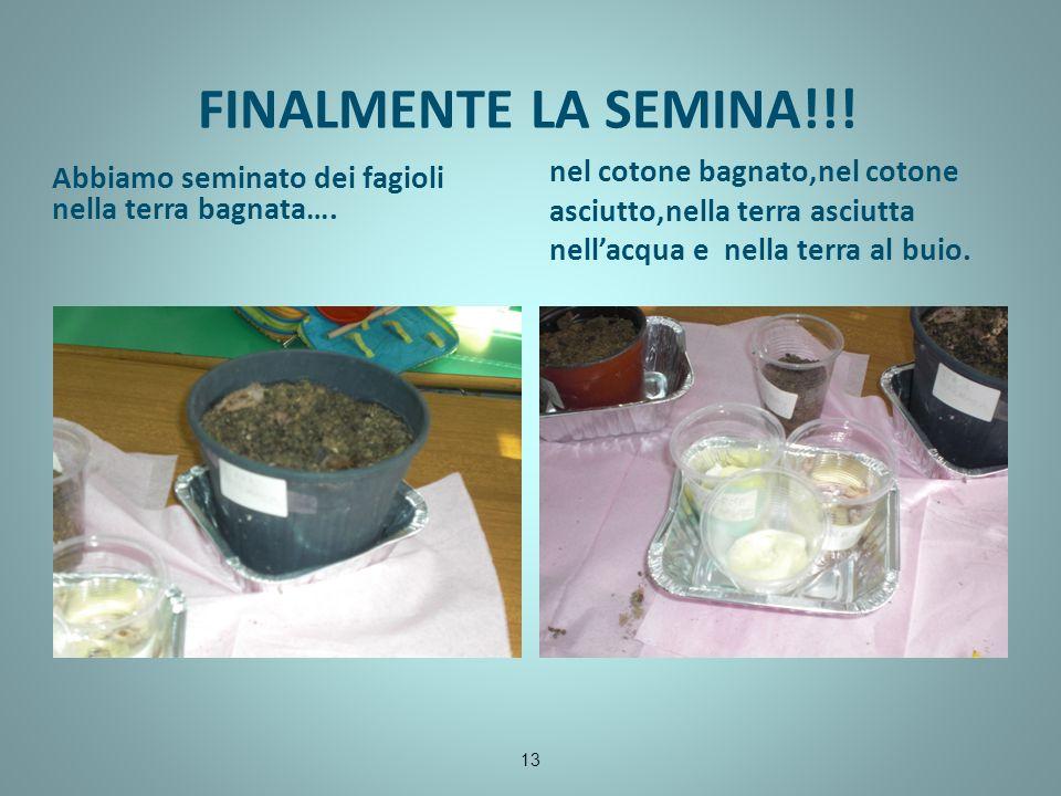 FINALMENTE LA SEMINA!!! Abbiamo seminato dei fagioli nella terra bagnata…. nel cotone bagnato,nel cotone asciutto,nella terra asciutta nellacqua e nel