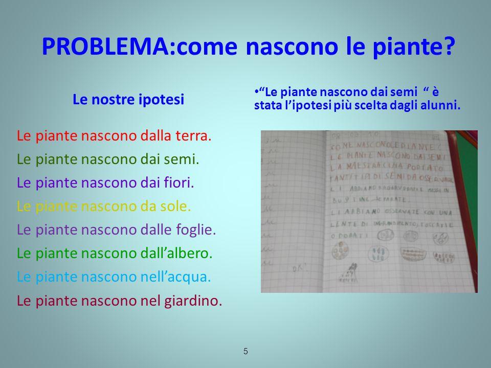 PROBLEMA:come nascono le piante? Le piante nascono dai semi è stata lipotesi più scelta dagli alunni. Le nostre ipotesi Le piante nascono dalla terra.