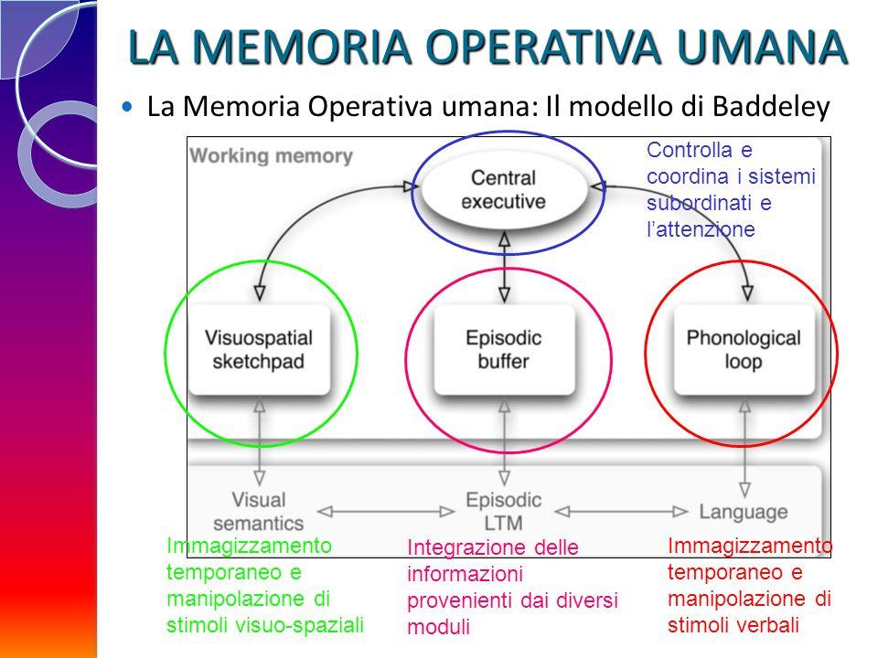 LA MEMORIA OPERATIVA UMANA La Memoria Operativa umana: Il modello di Baddeley Immagizzamento temporaneo e manipolazione di stimoli verbali Controlla e