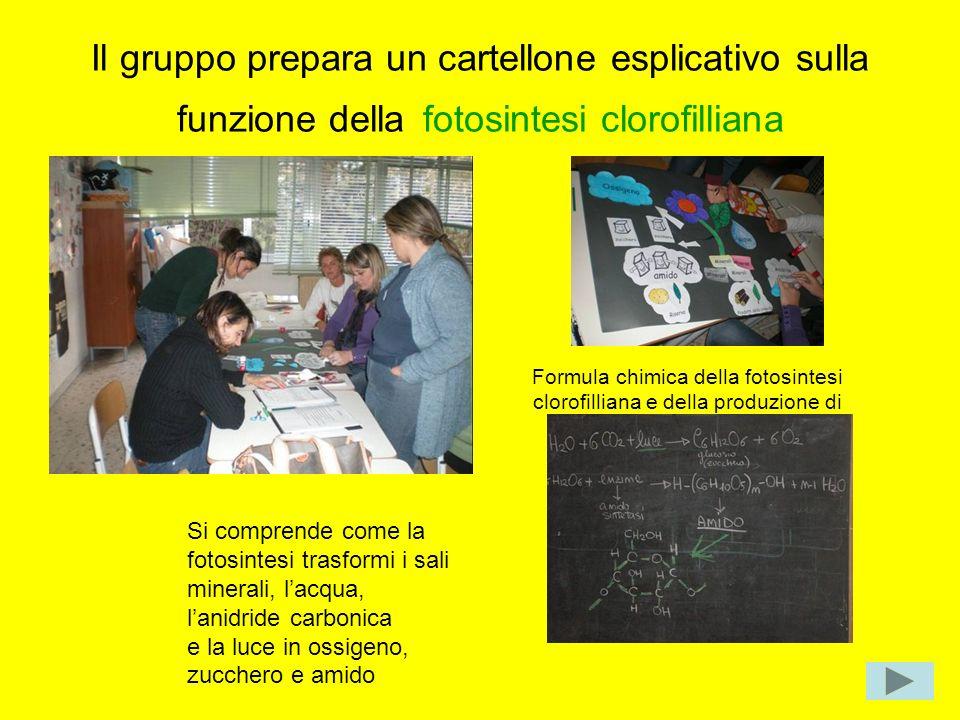 Il gruppo prepara un cartellone esplicativo sulla funzione della fotosintesi clorofilliana Si comprende come la fotosintesi trasformi i sali minerali,