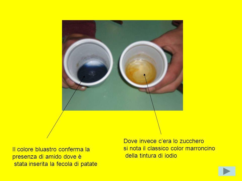 Il colore bluastro conferma la presenza di amido dove è stata inserita la fecola di patate Dove invece cera lo zucchero si nota il classico color marr