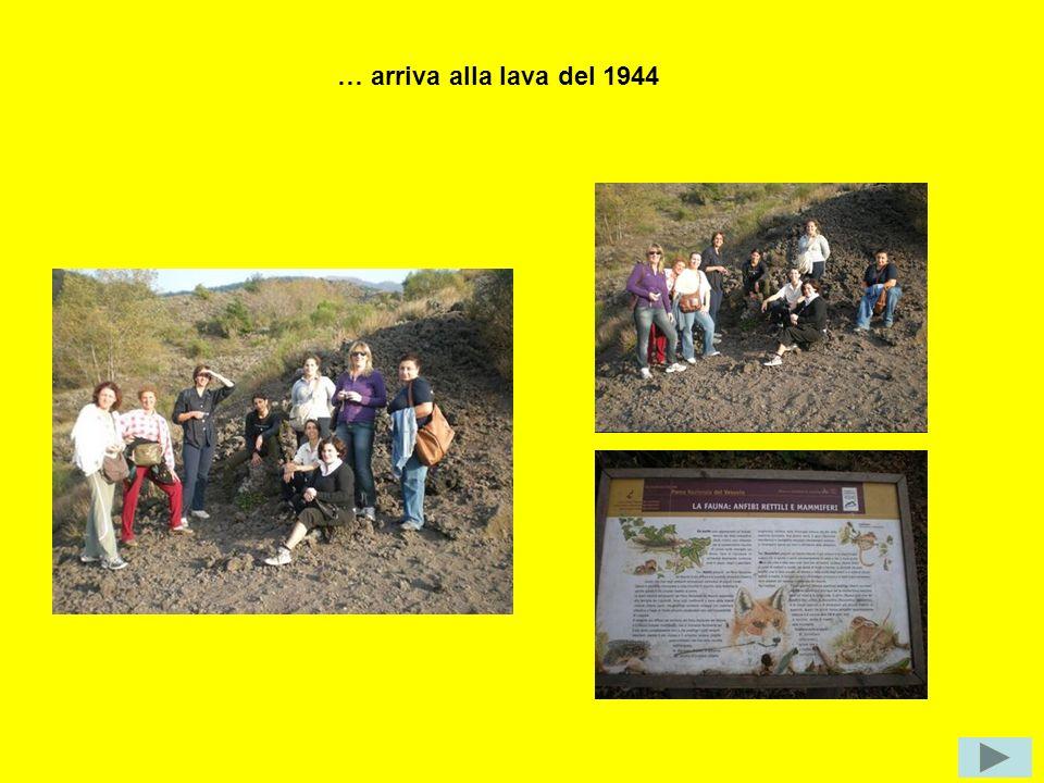 … arriva alla lava del 1944 Potrebbe vedere anche la fauna tipica, ma non è stata fortunata