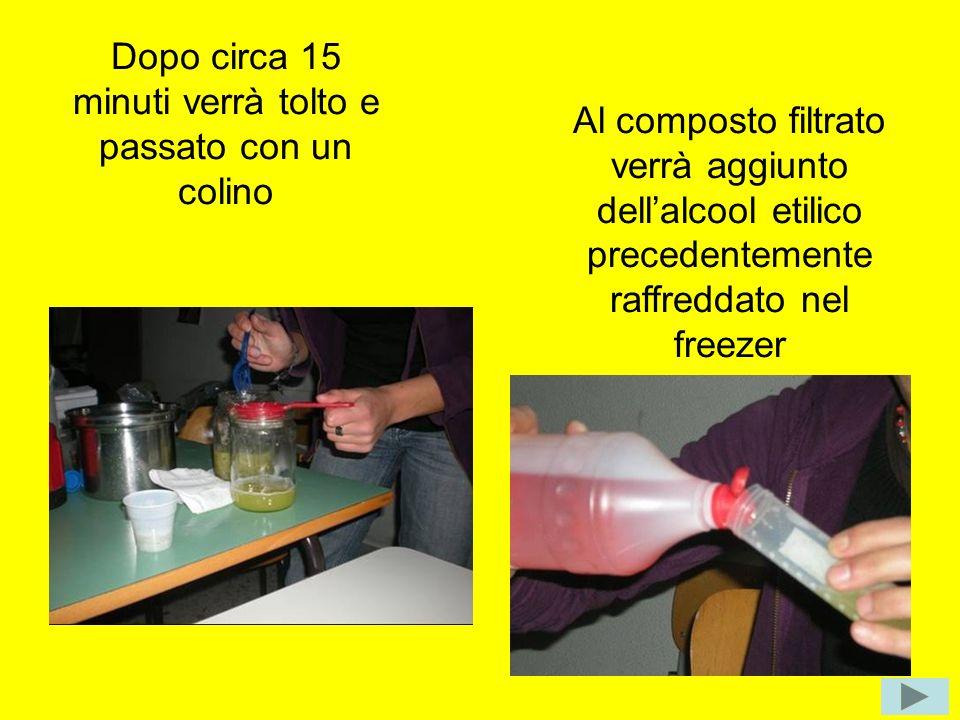 Dopo circa 15 minuti verrà tolto e passato con un colino Al composto filtrato verrà aggiunto dellalcool etilico precedentemente raffreddato nel freeze